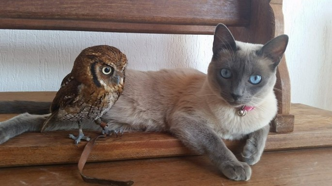 Cat-and-Owl-02-685x385